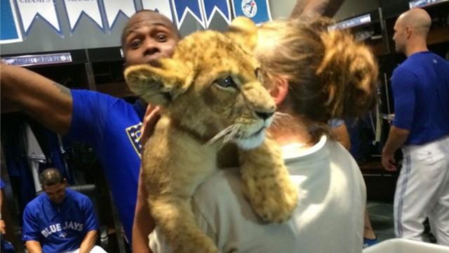 Jays criticized by PETA after lion cubs visit